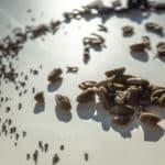 Nuestras aceitunas deshidratadas: un producto 100% natural