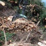 La biomasa: todo lo que necesitas saber sobre esta fuente de energía
