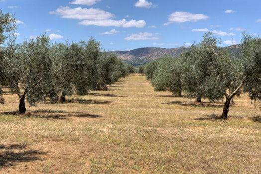 El olivar, un aliado en la conservación de la biodiversidad