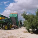 Verdeo 2019: así está siendo la recepción de nuestra materia prima
